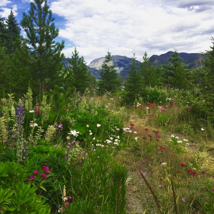 Mountain foliage Grand Lake CO