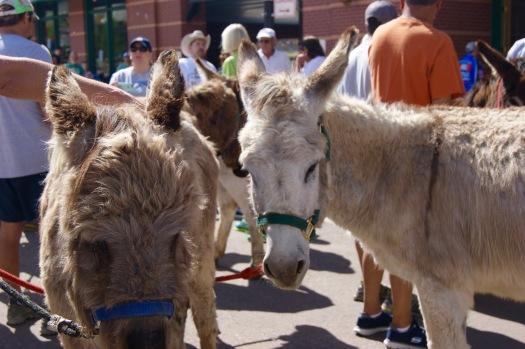 cripple creek donkeys